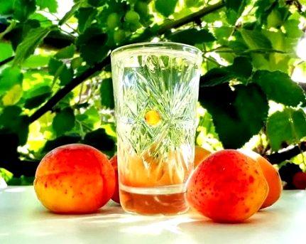 Брага из абрикосов в домашних условиях простой рецепт