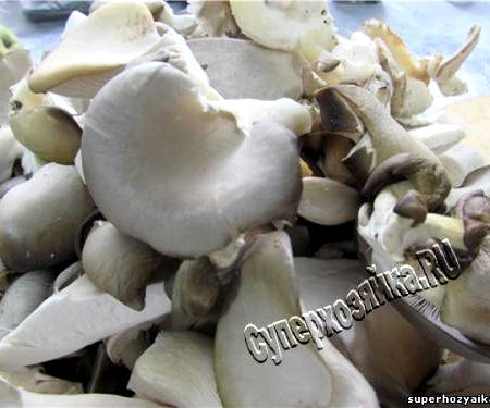 Маринованные грибы вешенки очень вкусный рецепт