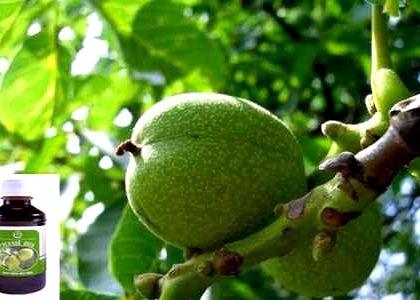 Настойка из грецких зеленых орехов рецепт
