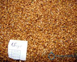 Рецепт самогона в домашних условиях из пшеницы